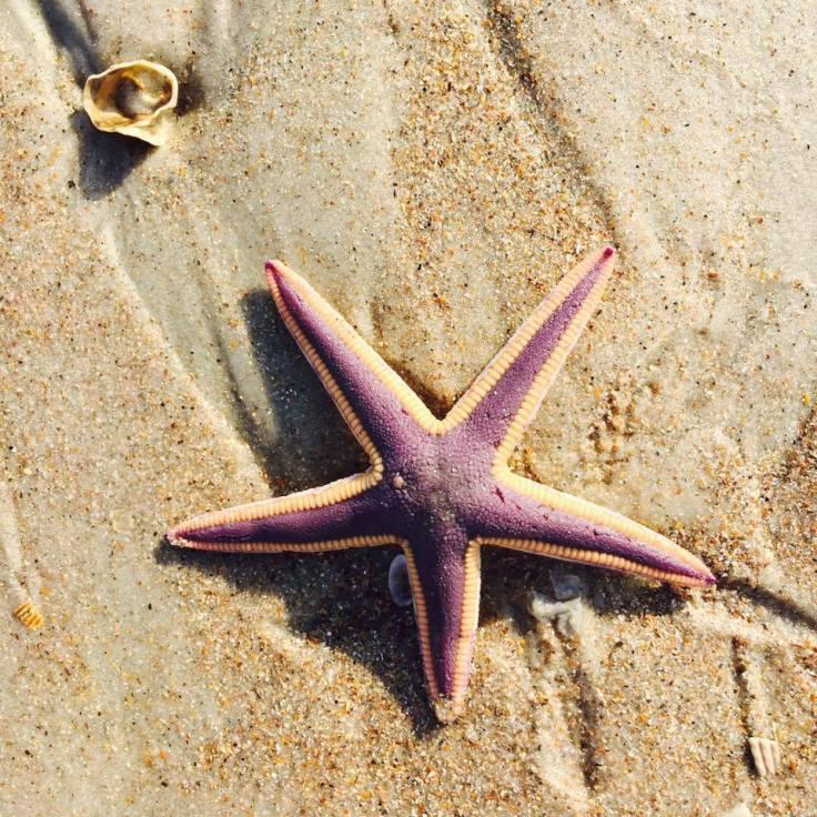 starfish 0217
